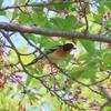 新緑の雑木林の野鳥たち