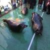 海獣パラダイス