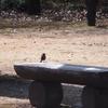 府中郷土の森の野鳥たち