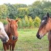 「ダイワ」で始まる馬たちの馬名由来