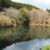 紫水の池(静岡県函南)