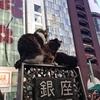 都内にはこんなに鉄道のフリー切符があるってご存じでしたか?東京メトロ24時間券