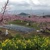 桃源郷に桃の花を見に行って泥だらけに(;ω;)