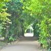 子連れ沖縄旅行 フクギ並木散策~琉球古民家で食事【お食事処ちゃんや】