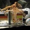 予言者パウルに捧げるドイツ優勝……それを契機に「世界を動かしたたこ」11傑を選定する