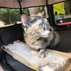 猫ハルのキャンプ生活、移動中のトイレは「にゃー」で合図する。ハルはバカじゃない🈴