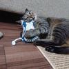 特大猫まきびしの威力がハンパない件【猫のおもちゃ】