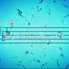 アニメ『響け!ユーフォニアム2』1話「まなつのファンファーレ」前半感想