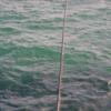 鮭・カラフトマス釣場の考察/  大型ニシン!!今日の紋別港釣り情報