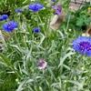 梅雨前の庭の記録