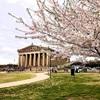 地域・社会貢献で桜を植樹する計画が進行中… ジンダイアケボノはソメイヨシノの救世主⁉ なんとアメリカが期限のようです…
