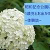 【育児】昭和記念公園に1歳児とお出かけ!ー体験談ー