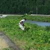入川道草刈り