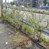 路上に咲く巨大化した雑草の花を見て、ブログ継続を決意した