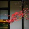 紅葉シーズンの修善寺は、温泉が気持ちよく富士山が大迫力