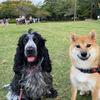 昆陽池犬部の日曜日の午後