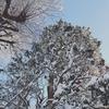 雪景色と紙景色