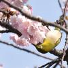 鳥たちも春を満喫