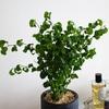観葉植物で居心地のよい部屋を作る方法