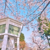 【穴場あり】横浜みなとみらい〜山手で好きな桜スポット30選(2019年3/23更新)