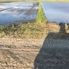 田植え前は水を少なくする