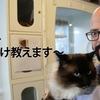 ドキュメンタリー「猫ヘルパー 猫のしつけ教えます」問題猫を助けよう。あらすじ、感想。