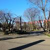 高崎公園周辺散歩 梅は満開・ハクモクレンは咲始め・コヒガンザクラも開花・ソメイヨシノの花芽