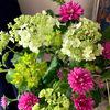 花の色が黄緑から白へ変化するお花