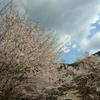 美しい日本の「四季の歌」からの一年