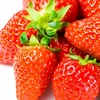 群馬県の四万温泉近郊「子持観光いちご園」。甘〜く綺麗で大きい!最高に美味しいイチゴが食べられる!