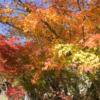 嵐山の紅葉(1) 新型コロナウィルス前を思わせる混み具合だった。20201115