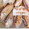 2020年9月24日 小浜漁港 お魚情報