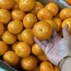 今日の果物 (2020/SEP/08) Today's Fruits