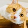 愛猫がド接近してくる、わたしの仕事場をご紹介。