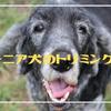 シニア犬のトリミング