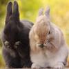 【ざつだん!】1人暮らしでうさぎを2匹飼う生活について【多頭飼い】