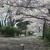 石屋川の桜と御影公会堂のオムライス