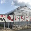 【福岡人気農園】池いちご園で狩ってきました