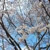 いつまで by Yohei
