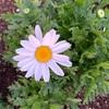 花に水遣り終えし子ら春隣(あ)
