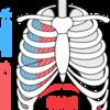 呼吸とインナーユニットとミトコンドリアの関係性…自然治癒力を引き出すために…