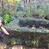 桂造園の剪定仕事