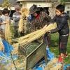 神戸市近郊の学生さん募集!!11月26日(日) 「親子農業体験」 もち米の脱穀&カレー作り!