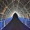 済州島(チェジュ島)夜間スポット #ロマンチックな光に包まれた彫刻公園「フォレストファンタジア」