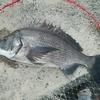 清水 紀州釣り きびしい
