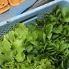来週のお野菜予報:相変わらず葉物溢れています!