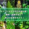 タナゴにおすすめの水草10選!種類や特徴を紹介!美しい水景を作ろう