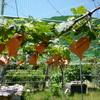 ブドウ園の本質