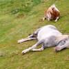 早く眠っても疲れが取れない。気合が足りん!
