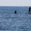 波がなくても楽しめるサーフボード!?